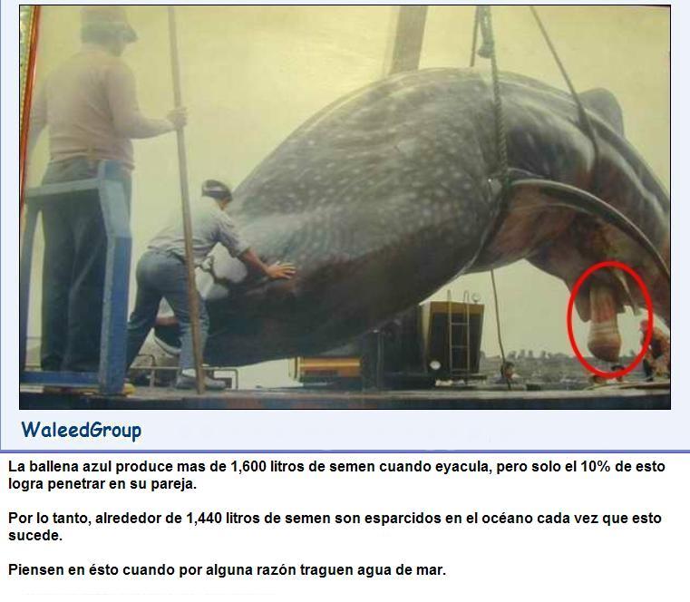 whale-wg[1].jpg